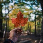 Blog - Study in Canada
